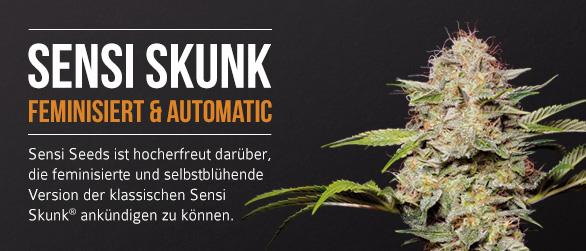 Sensi Skunk Feminisiert und Automatic