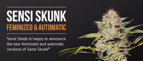 Sensi Skunk Feminized and Automatic