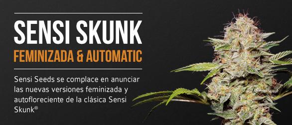 Sensi Skunk Feminizada Automatic