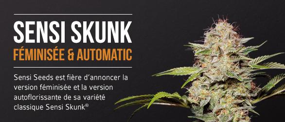 Sensi Skunk Féminisée & Automatic