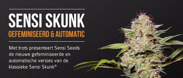 Sensi Skunk Gefeminiseerd en Automatic