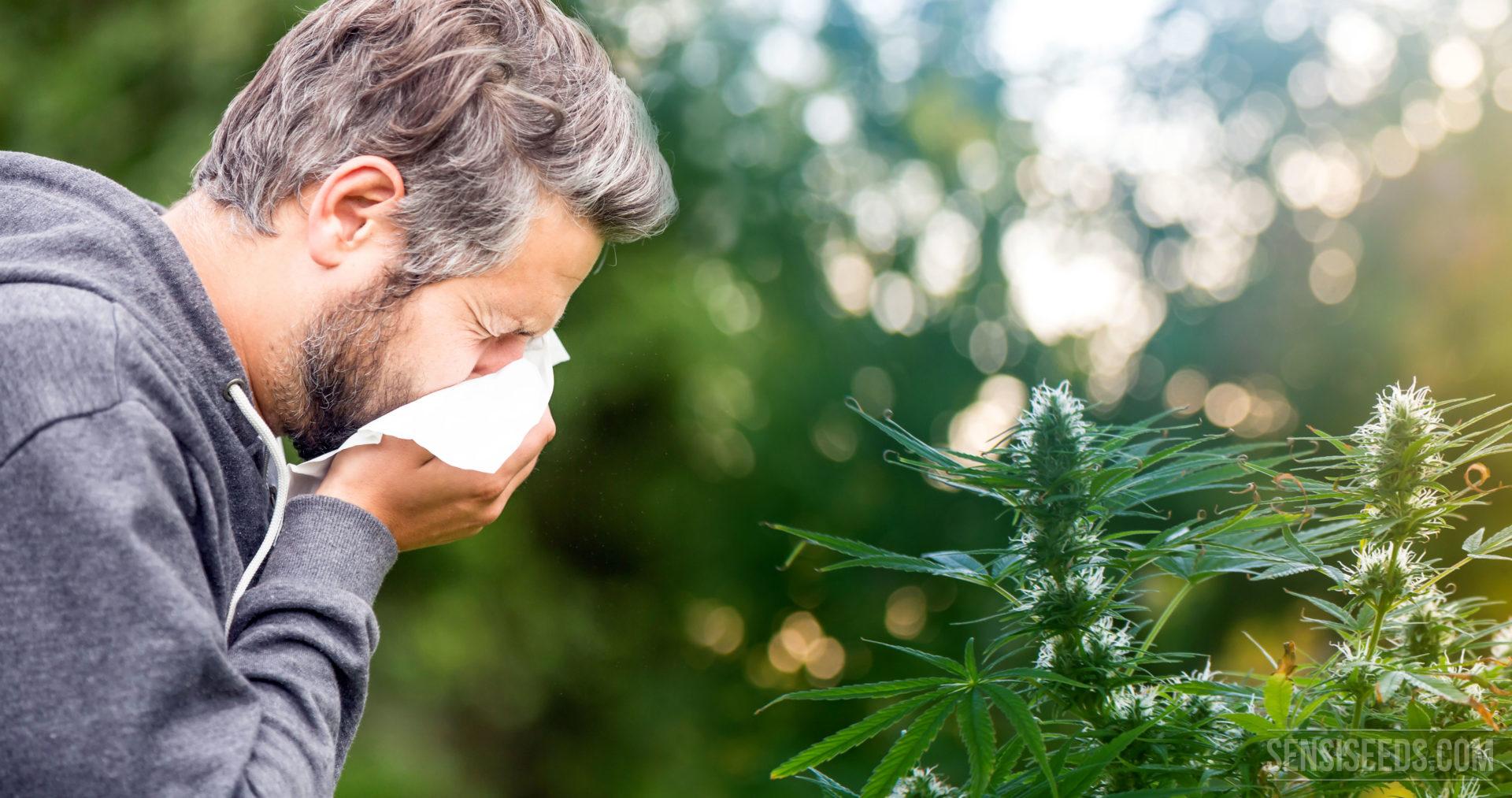 Allergie Planten Huid : Bestaat cannabisallergie