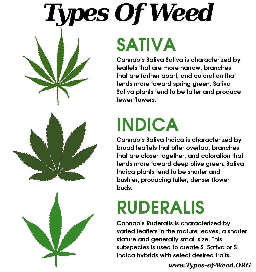Todo lo que necesitas saber acerca de las hojas de cannabis for What kind of house do i have