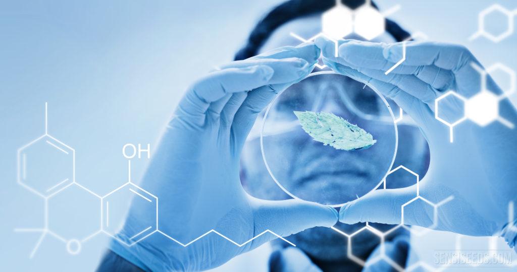 La Ciencia de los Cannabinoides 101 : El Cannabidiol