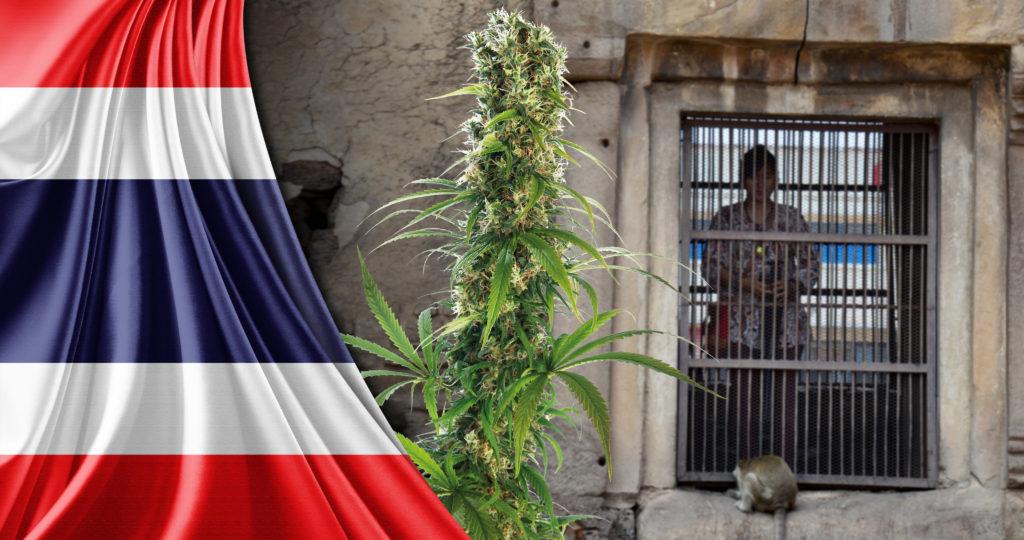 36-cannabis-in-Thailand_4K