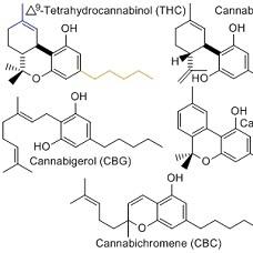 Cannabinoid Science 101: What is Cannabigerol?