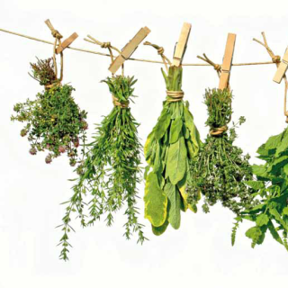 Medicinal plants: The original source
