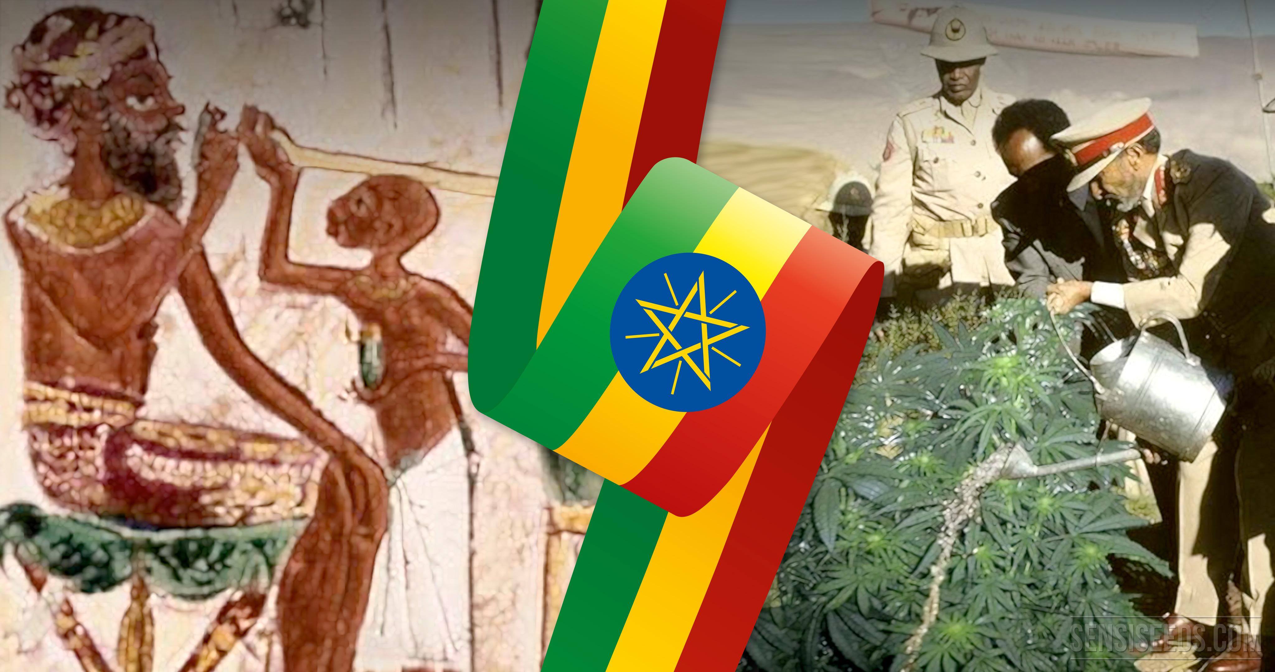 Cannabis in Ethiopia - Sensi Seeds Blog