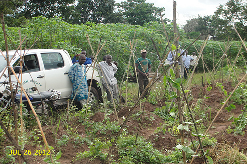 Cannabis cultivation in Nigeria - Sensi Seeds Blog