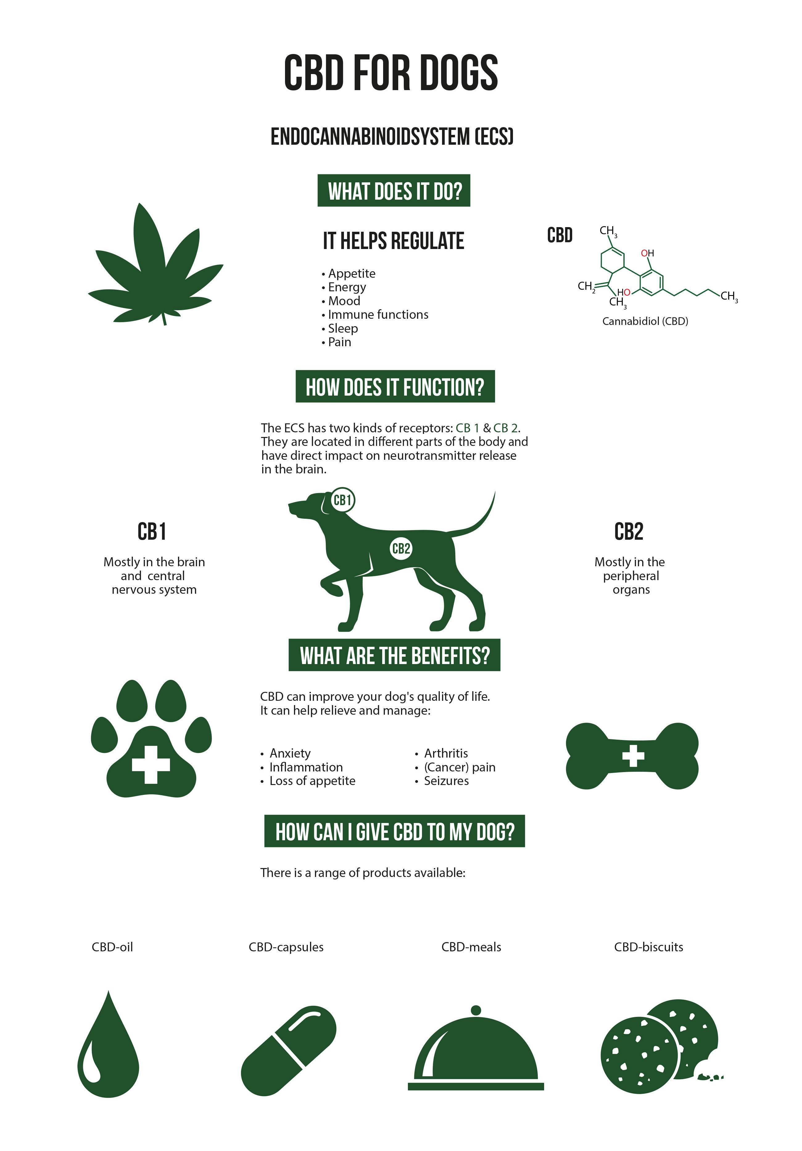 Een infographic waarop het proces van het verkrijgen van CBD voor honden staat afgebeeld. De infographic vertoont cannabisbladeren, een hond, een voetafdruk met een medisch symbool in het midden, een pot met een medisch symbool in het midden, CBD-olie, CBD-capsules, CBD-maaltijden en CBD-hondenkoekjes. Alle afbeeldingen zijn getekend in een minimalistisch grafische stijl met een effen groene kleur.