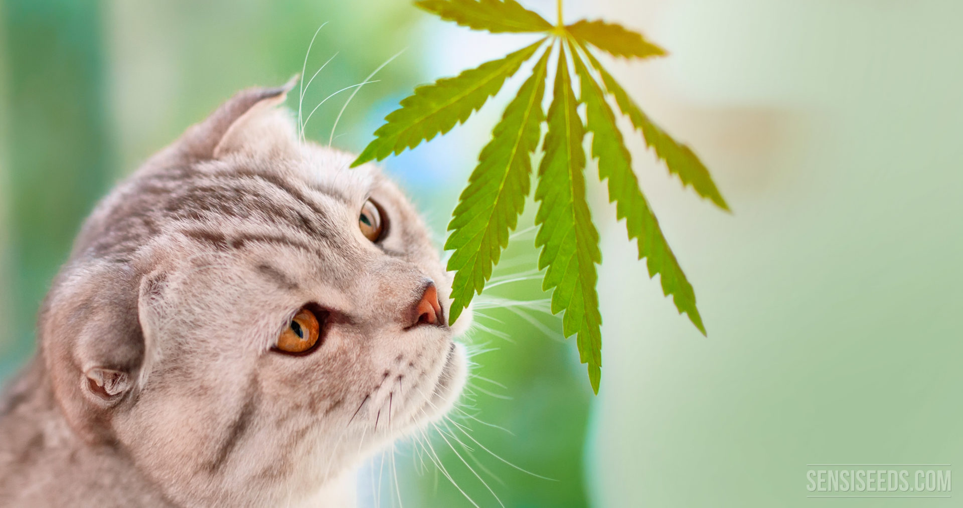 Cannabis and Animals? Yes, but with care!