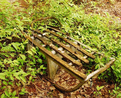 A la vez que la vegetación recupera lentamente zonas anteriormente habitadas, introducir especies conocidas como extractores efectivos de metales pesados del suelo puede ayudar en el rejuvenecimiento de los ecosistemas