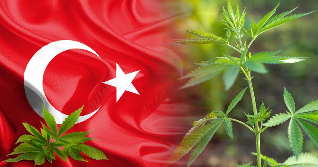 40-cannabis-in-Turkey_4K
