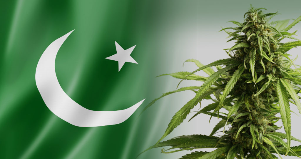 26-cannabis-in-Pakistan_4K