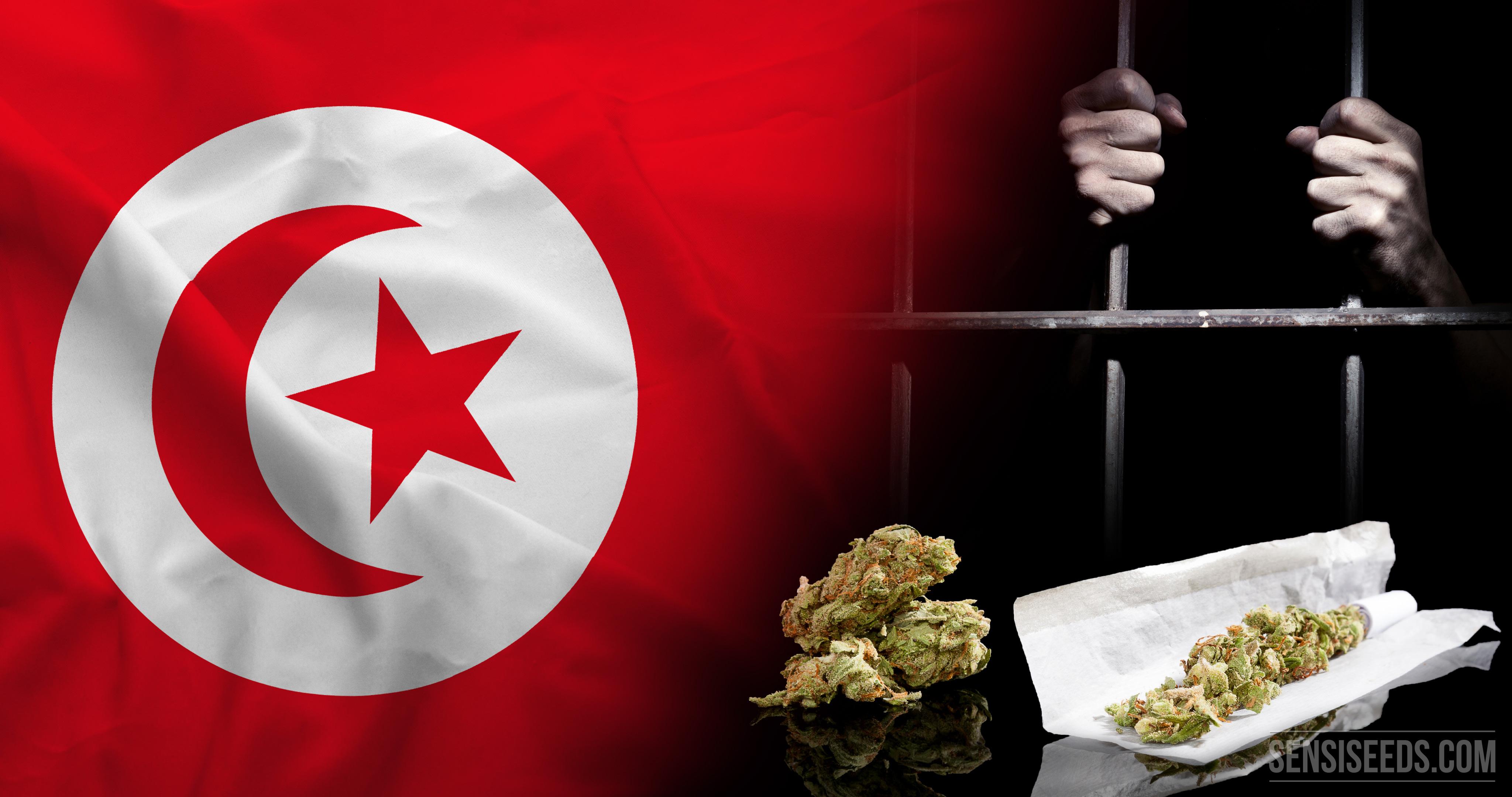 Cannabis in the United Arab Emirates - Sensi Seeds