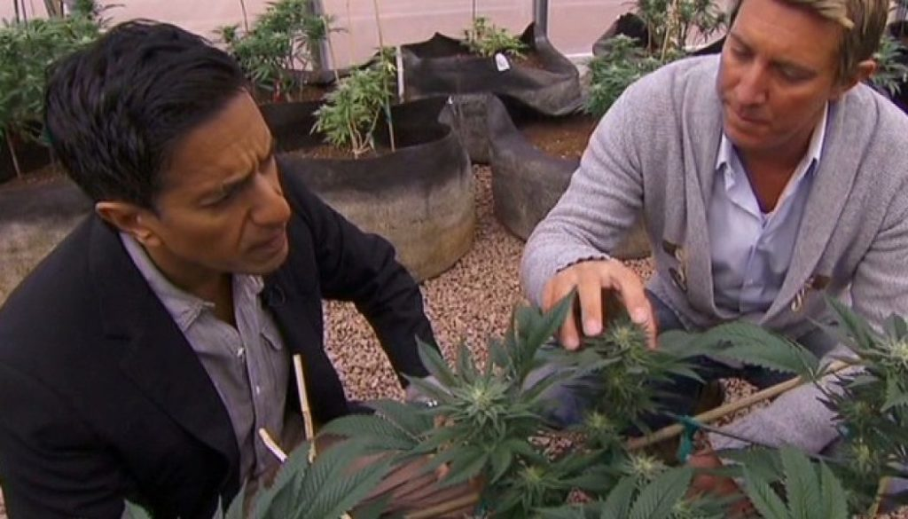 New cannabis documentary by Dr. Sanjay Gupta continues his post-conversion research - Sensi Seeds Blog