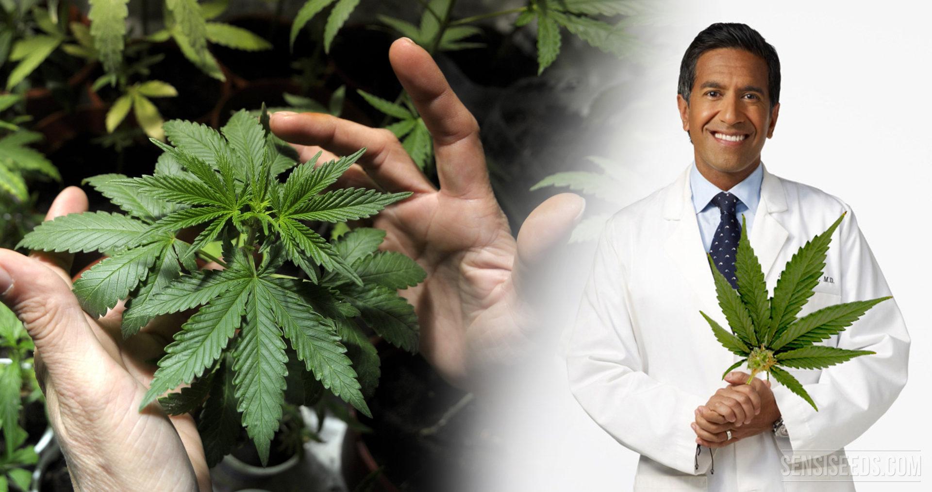 Dr Sanjay Gupta Cannabis