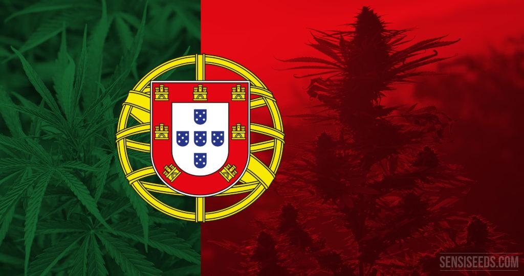 27-cannabis-in-Portugal_4K