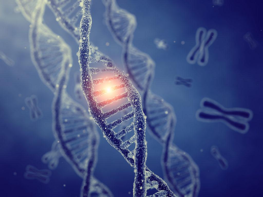 rol van genetische aanleg