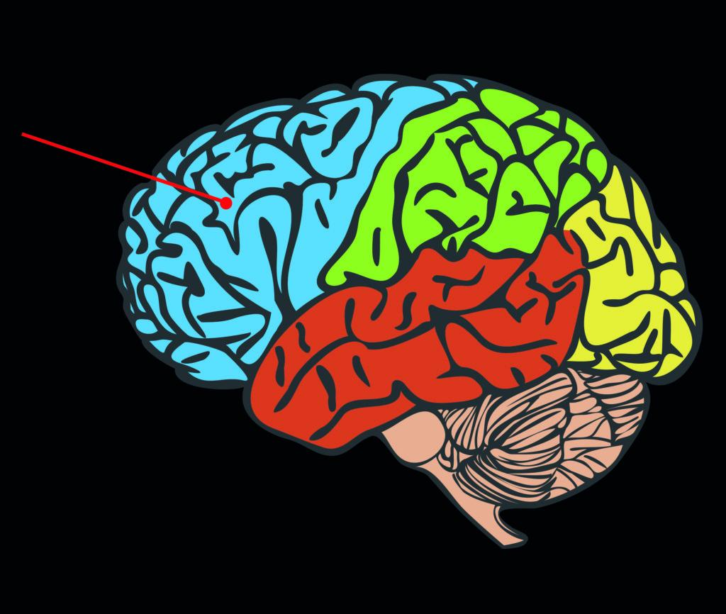 Eine grafische Darstellung des menschlichen Gehirns. Die Hemisphären (Gehirnhälften) sind durch Farben voneinander getrennt. Der präfrontale Kortex wird durch eine rote Linie als große Hemisphäre ganz links angezeigt.