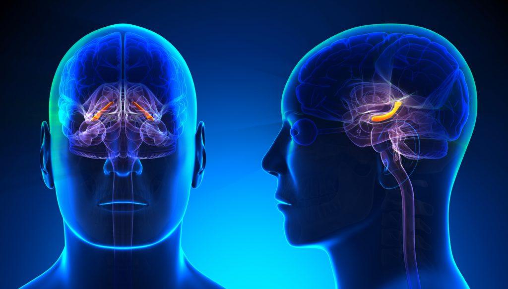 Eine digitale Darstellung, die eine durchscheinende blaue Gestalt und das Gehirn in ihrem Kopf von vorne zeigt. Der Hippocampus ist hell erleuchtet.