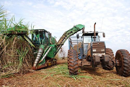 Les cultures contenant du saccharose, comme la canne à sucre, ont une forte teneur en glucose et un rendement abondant en éthanol, mais sont moins respectueuses de l'environnement que le chanvre (© Department of Energy & Climate Change)