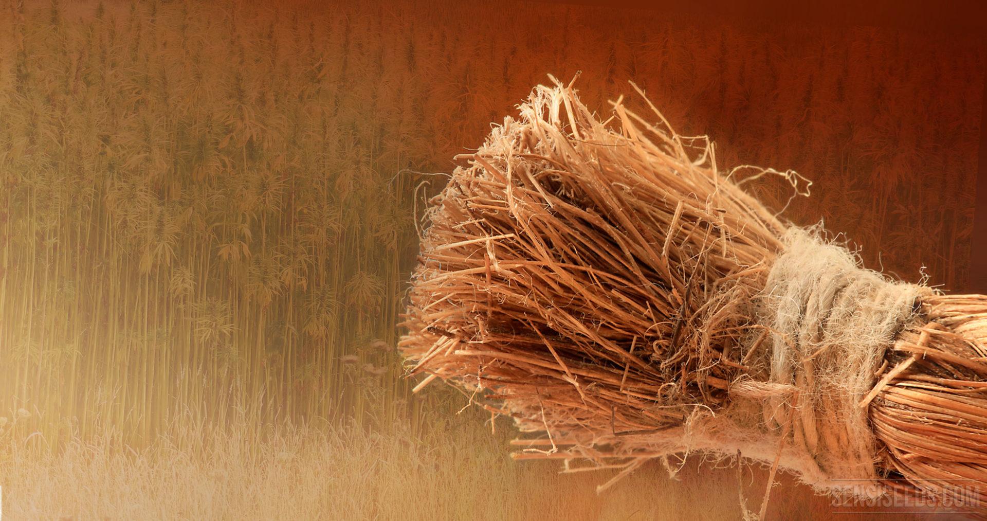 How are hemp plastics made?