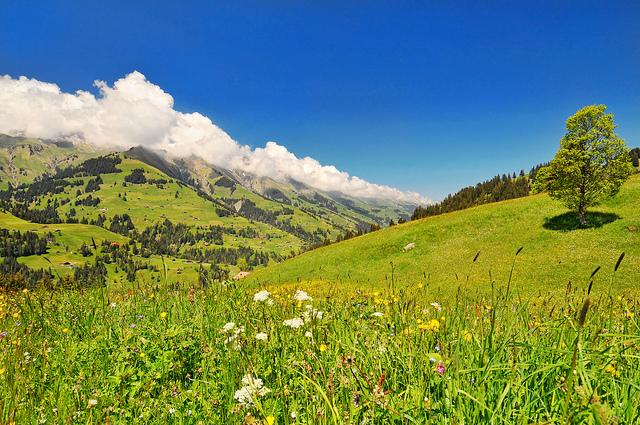 1_cannabis_present_in_Switzerland