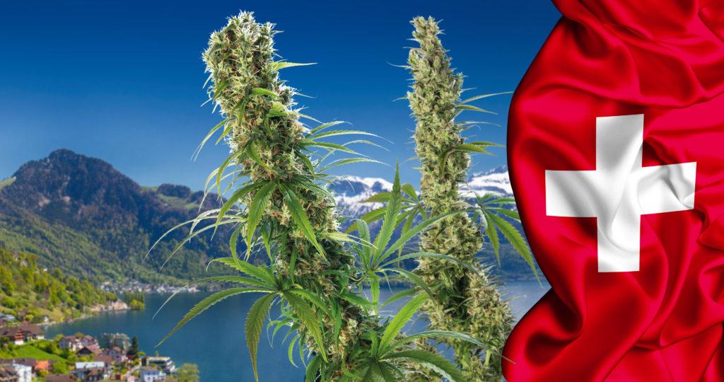 32-cannabis-in-Switzerland_4K