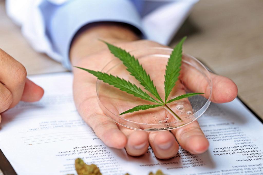 Comment choisir une variété de cannabis - Sensi Seeds