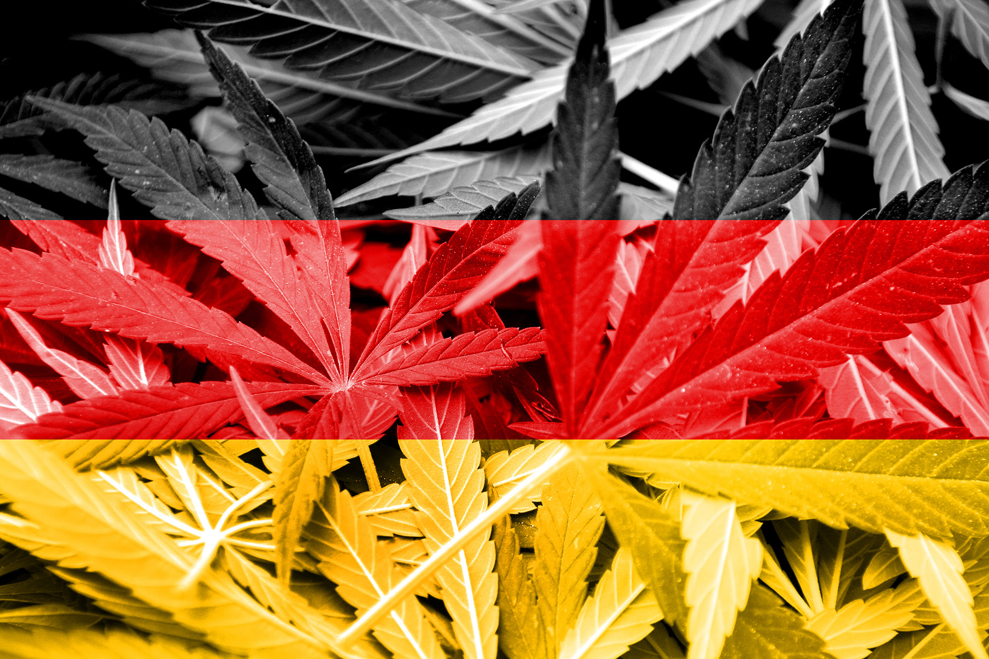 regulated legalization of cannabis in germany Hartford, conn — some state lawmakers want to know how recreational marijuana might be regulated if connecticut decides to someday legalize the drug the general assembly's general law.