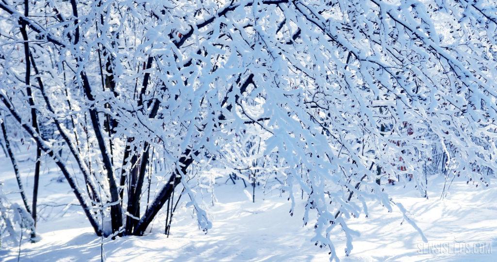 Comment faire pousser du cannabis en hiver for Temperature culture interieur
