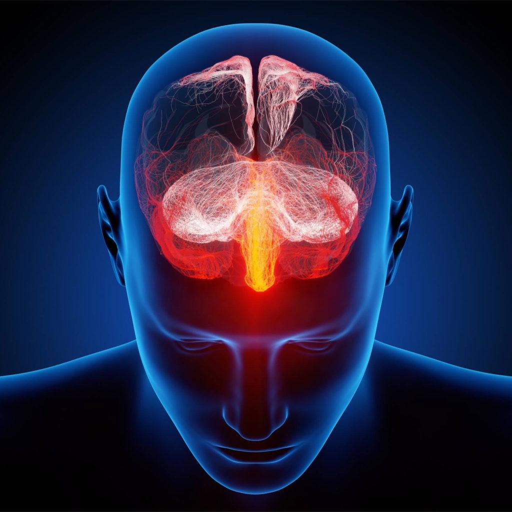 Een digitale illustratie waarop het bovenlichaam en hoofd van een doorzichtig blauw figuur te zien zijn. In het hoofd zien we een uitgelichte weergave van zenuwweefsel gemarkeerd in rood, oranje en roze.