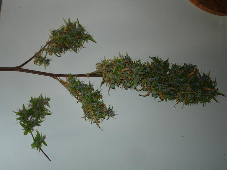 Dry trimming allows for better retention of flavour and aroma