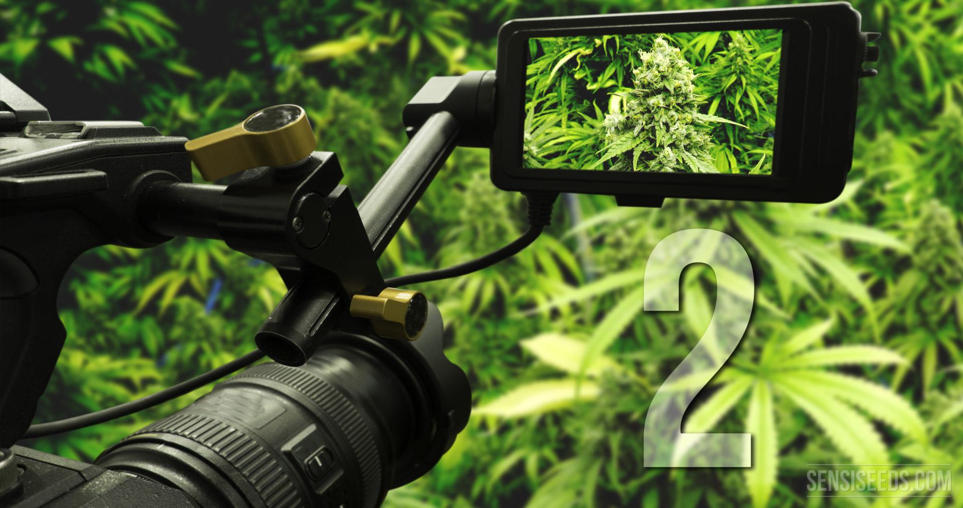 Newest 2015 cannabis documentaries