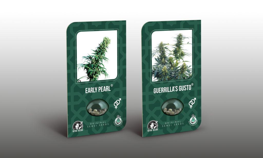 Las variedades Early Pearl y Guerrilla's Gusto son una excelente opción para los que se encuentran en zonas templadas.