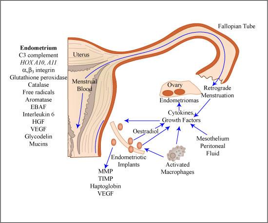 Vaginale Schmerzen während der Menstruation