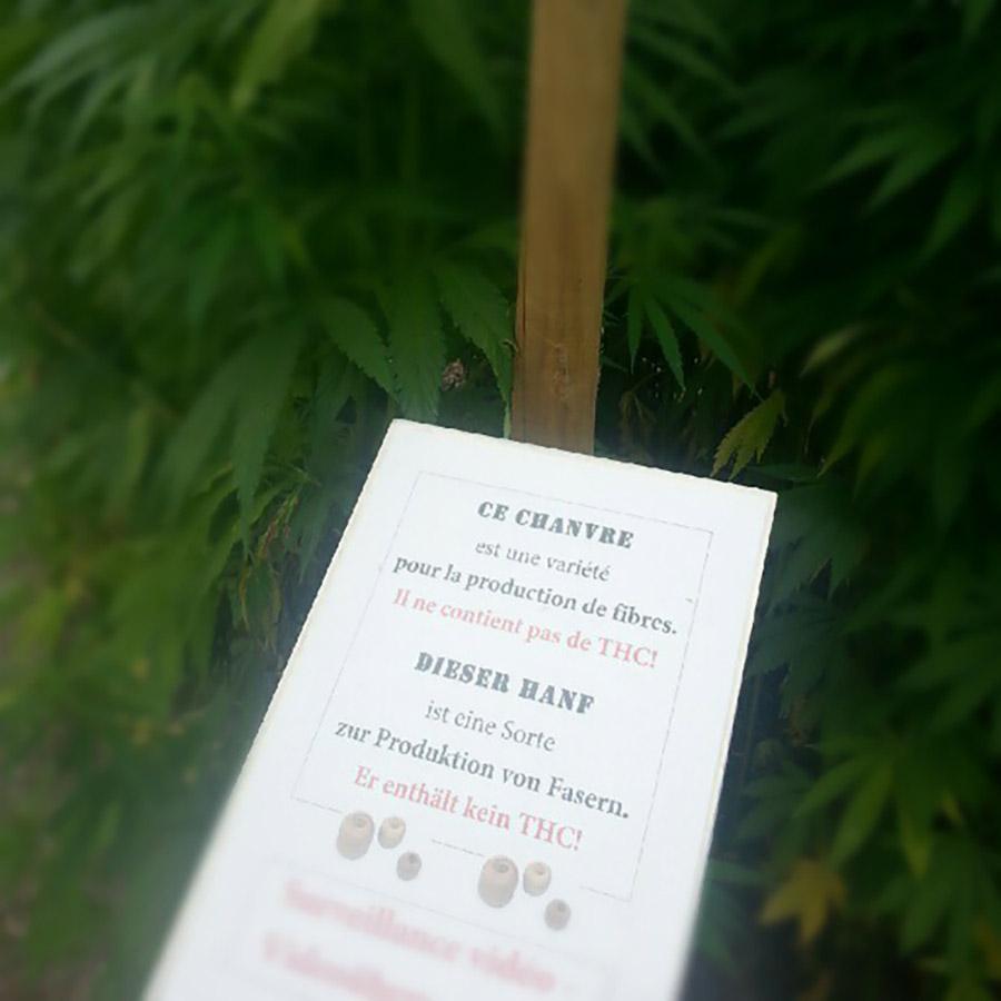 Een foto van een bord op een hennepkwekerij waarop in diverse talen staat dat het hennep die op dit veld wordt geproduceerd geen THC bevat.