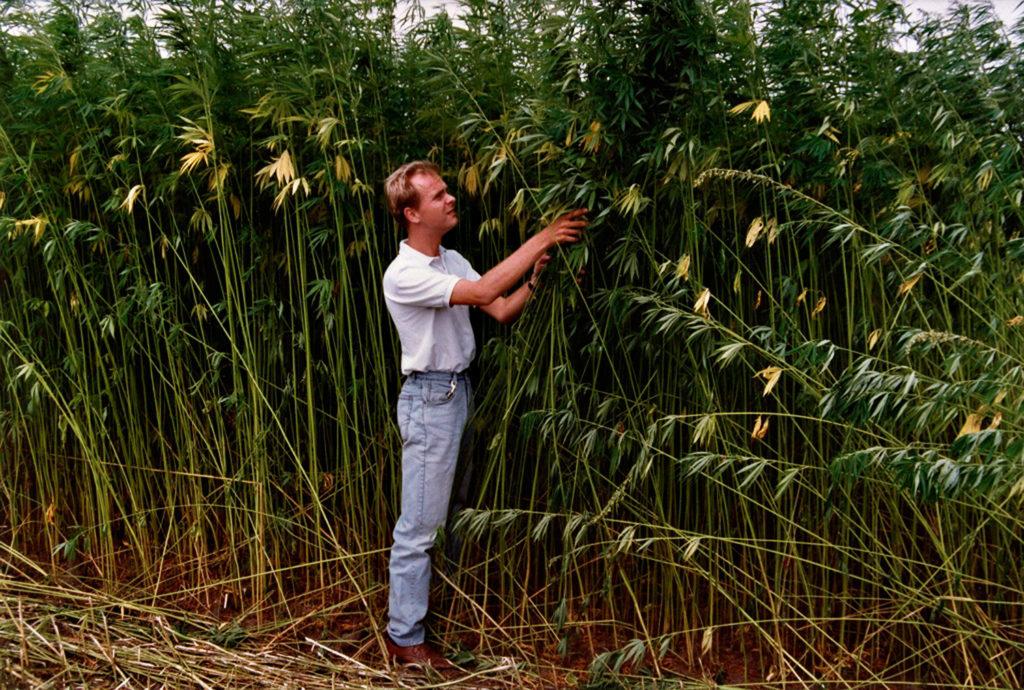 Alan en Hempax de pie frente a plantas verdes muy altas