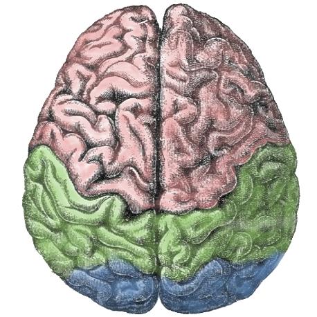 Carl Sagan, Cannabis, and the Right Brain Hemisphere, Part II