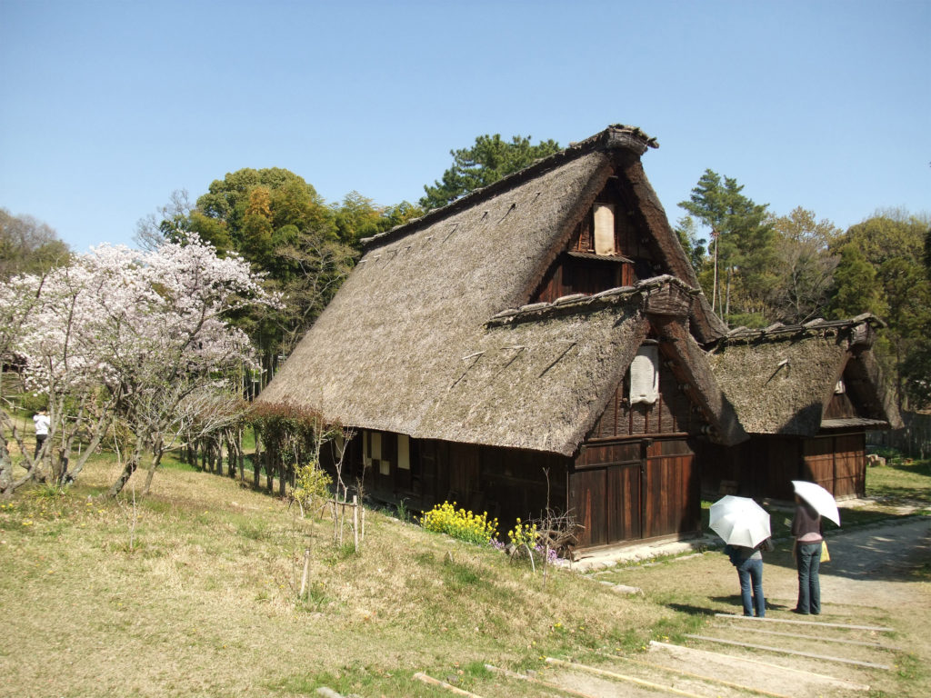 An image of an old Japanese farm house in Toyonaka City, Osaka Prefecture, Japan. The roof is made of straw, and the house of wood. A cherry blossom tree stands on a short hill to besides the home. Two observers with white parasols stand in front.