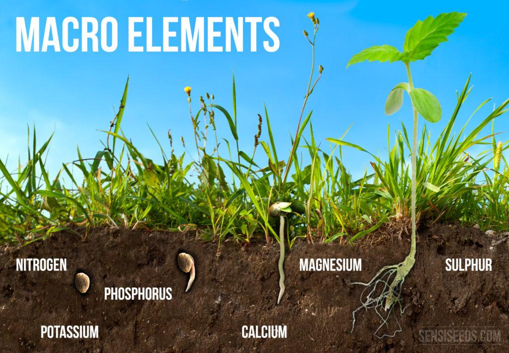 Minerale voeding voor cannabis - De macro-elementen