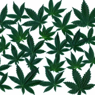 The long and rich history of Cannabis Sativa L.