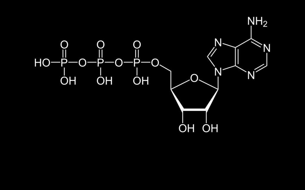 Diagramm, das die vereinfachte chemische Struktur des Adenosin-Triphosphat-Moleküls (ATP) darstellt, das in allen Lebewesen als Energiequelle vorhanden ist.