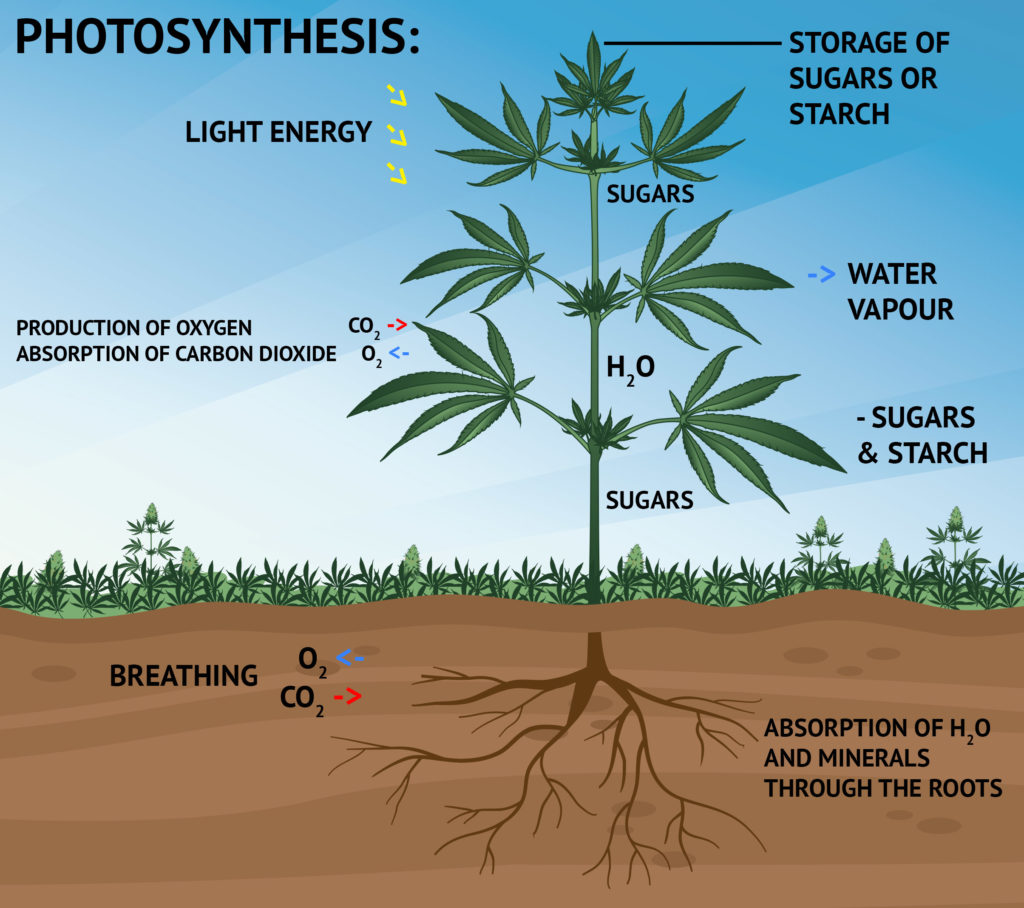 3 energy states of photosynthesis GPhoto - Projects : libgphoto2 : supported cameras