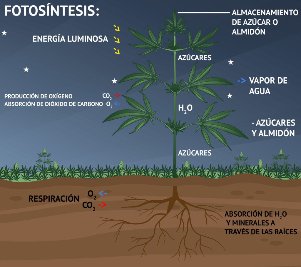 Fotosintesis y sus etapas 59