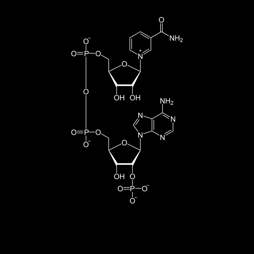 The structure of nicotinamide adenine dinucleotide, oxidized (NAD+). A coenzyme that intervenes in numerous anabolic pathways.