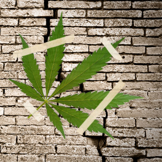 Lime-Hemp Groningen promising for earthquake resistant building