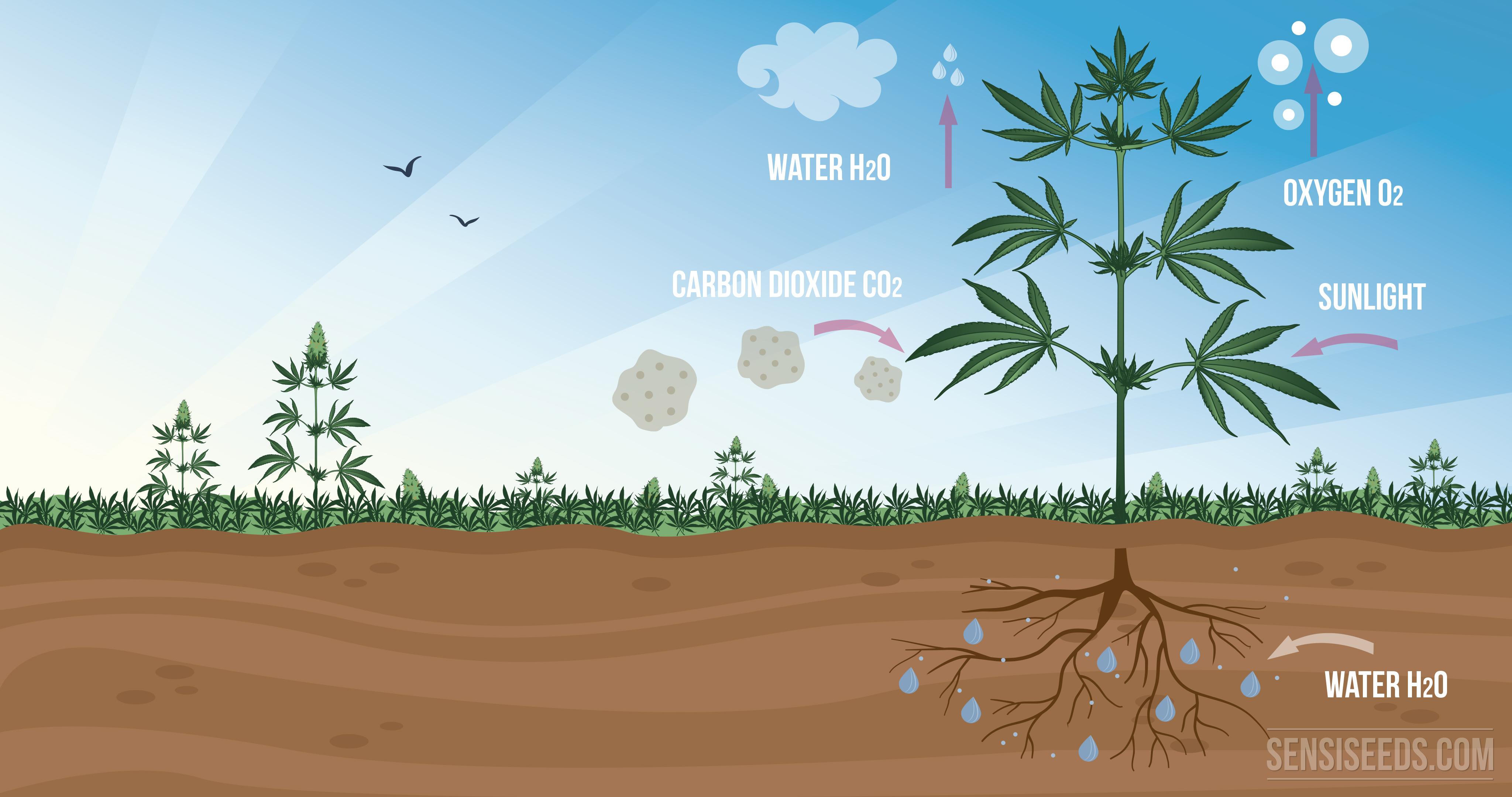 Sustancias que produce la planta durante la fotosintesis 74