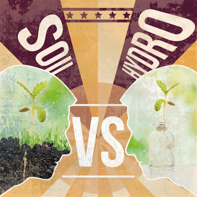 Culture en terre ou hydroculture quelques informations for Soil vs hydro